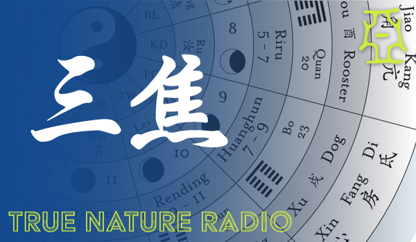 The Triple Warmer Organ Network of Chinese Medicine